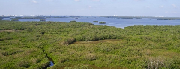Exploring Fort Myers' Natural Areas