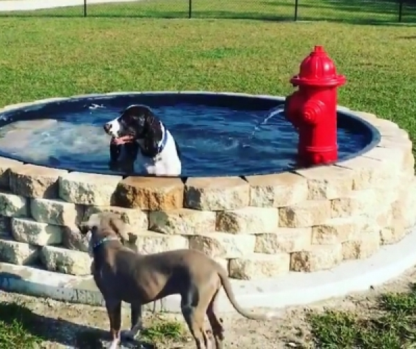 Helping Your Dog Beat the Florida Heat